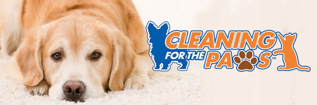pet stain removal logan utah