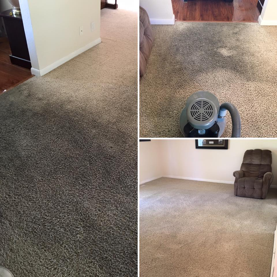 carpet cleaning in logan